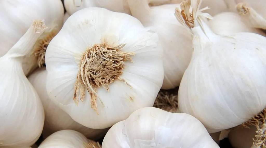garlic, food, ie malayalam