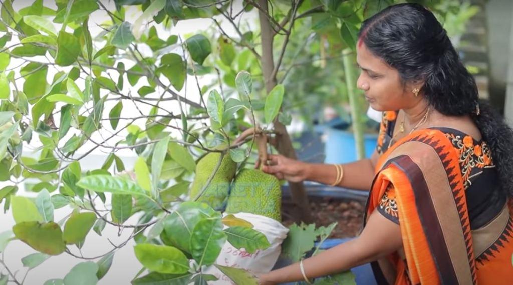 vegetables, video, ie malayalam