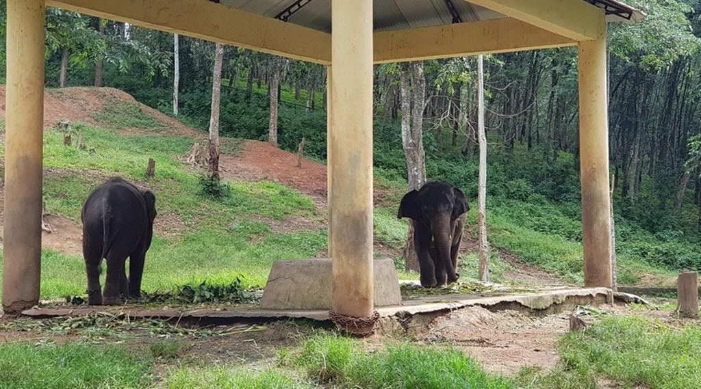 Elephant, Elephant death, Kottoor Elephant rehabilitation Center