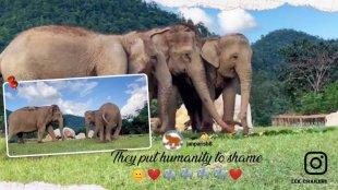 Elephant guiding blind elephant towards food, viral video, Elephant Nature Park , Thailand, Trending news, Indian Express news, malayalam viral, viral video, വൈറൽ, ആന, ie malayalam