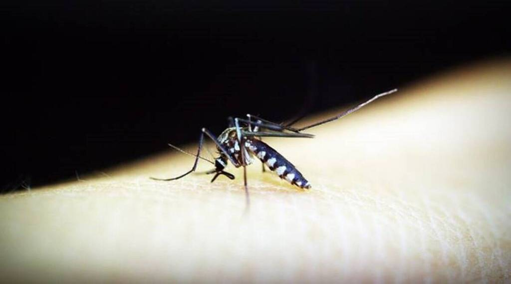 mosquito, health, ie malayalam