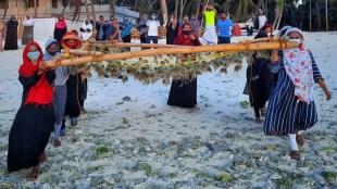 Lakshadweep, Lakshadweep starts seaweed farming, Lakshadweep launches seaweed farming, Large-scale seaweed farming Lakshadweep, CMFRI, Central Marine Fisheries Research Institute, Edulis seaweed Lakshadweep, Lakshadweep administrator Praful Khoda Patel, Indian Express Malayalam, ie malayalam