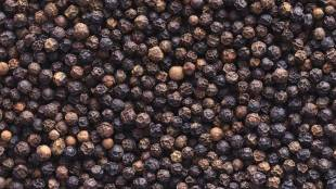 black pepper, food, ie malayalam